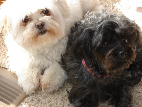 Oliver and Sofi