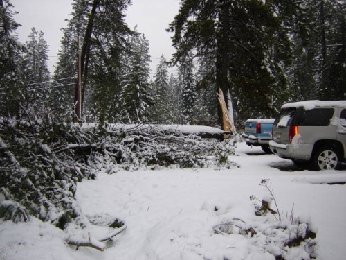 The other half of the tree landed just a few feet from the cars!